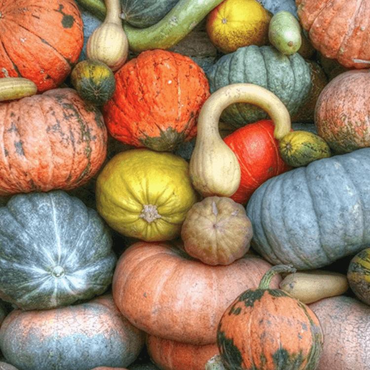 5 ting I kan lave sammen i efterårsferien
