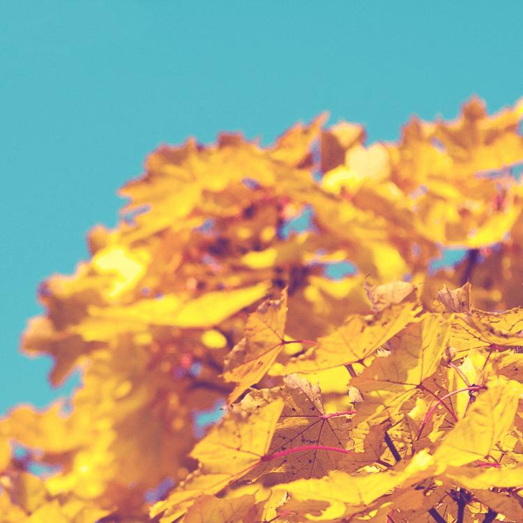 Inspiration til den perfekte efterårsweekend